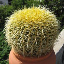 Kaktus-Pflege
