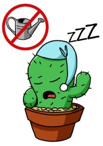 kaktusschlafena3
